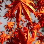 Autumn1.07