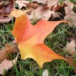 Autumn1.26