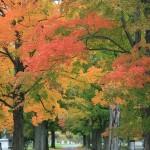 Autumn1.27