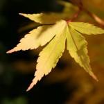 Autumn1.31