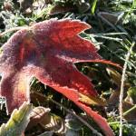 Autumn1.34