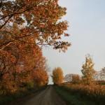 Autumn1.44