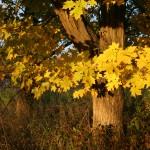 Autumn1.45