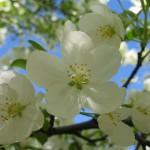 Spring114