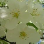 Spring117