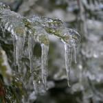 Winter117
