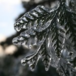 Winter119