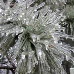 Winter129