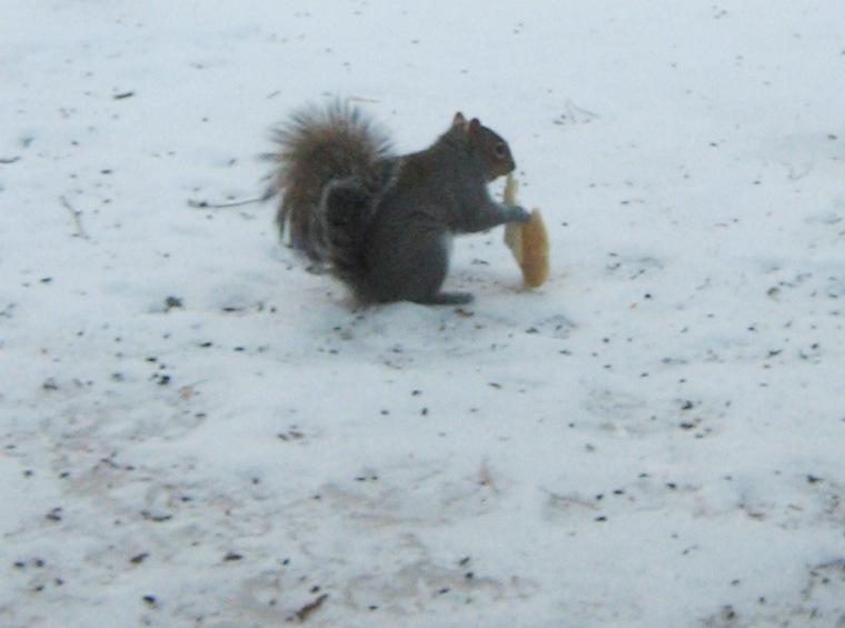 14wintsquirrel