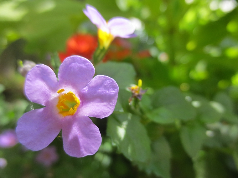 14littleflower1