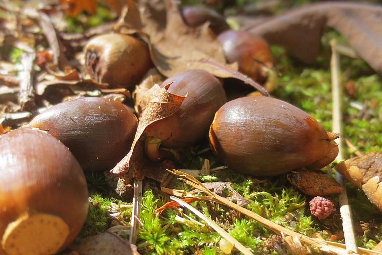 acorn 1401