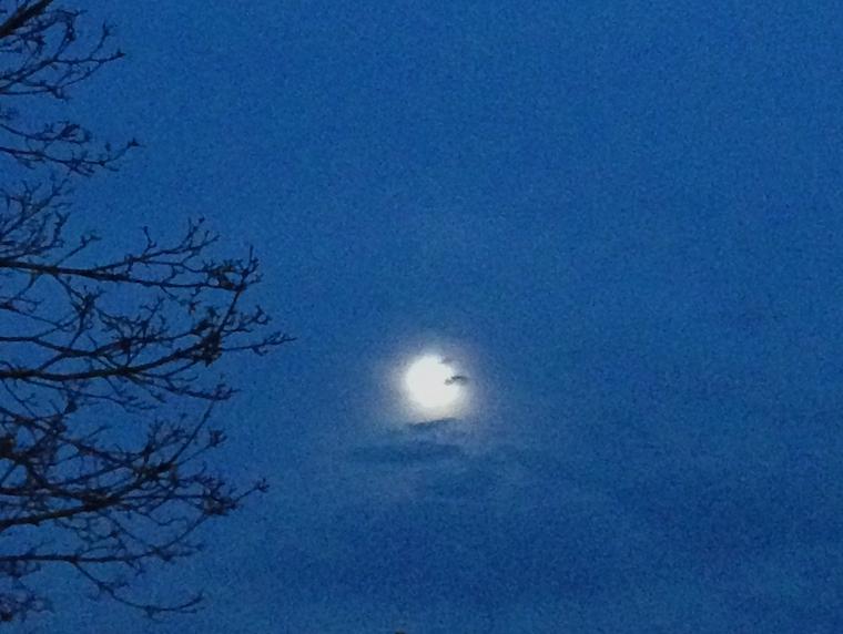 moonf1