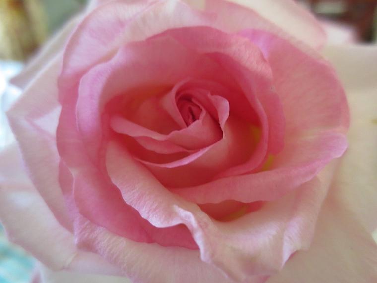 15 rose puck 1