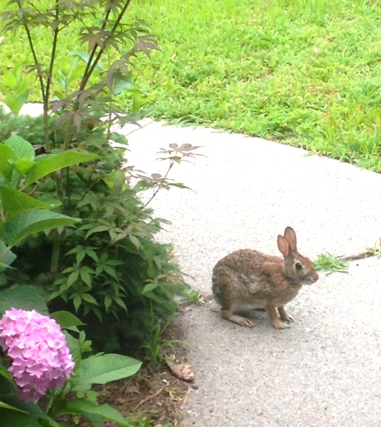 15 bunny 01