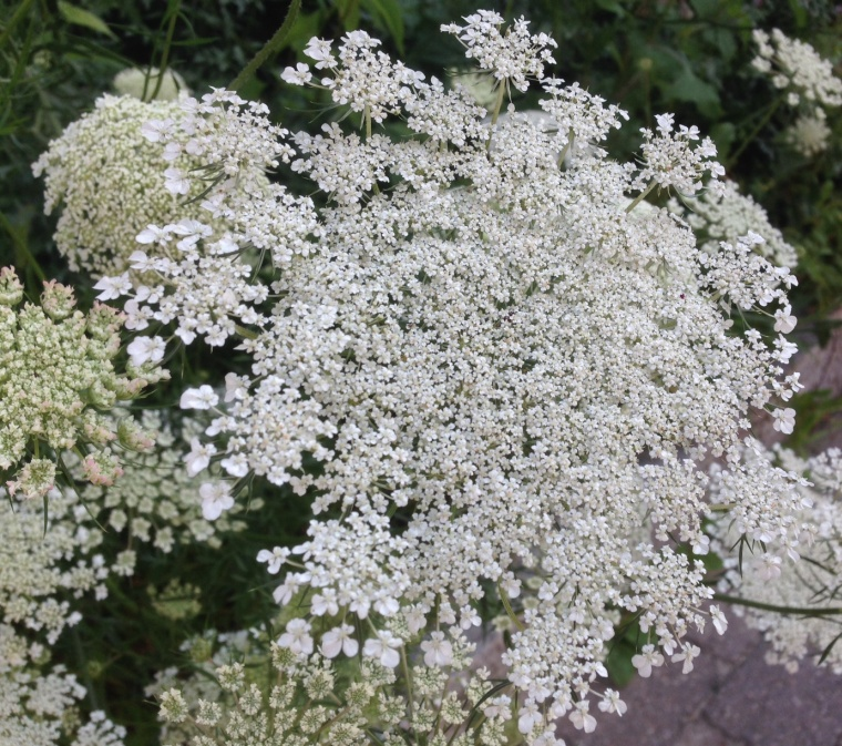 15 queen lace 1