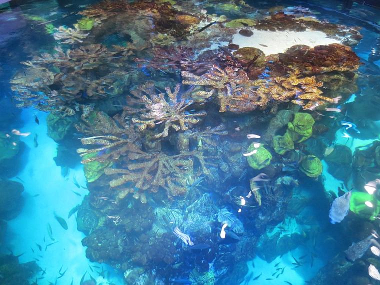15 bday undersea1