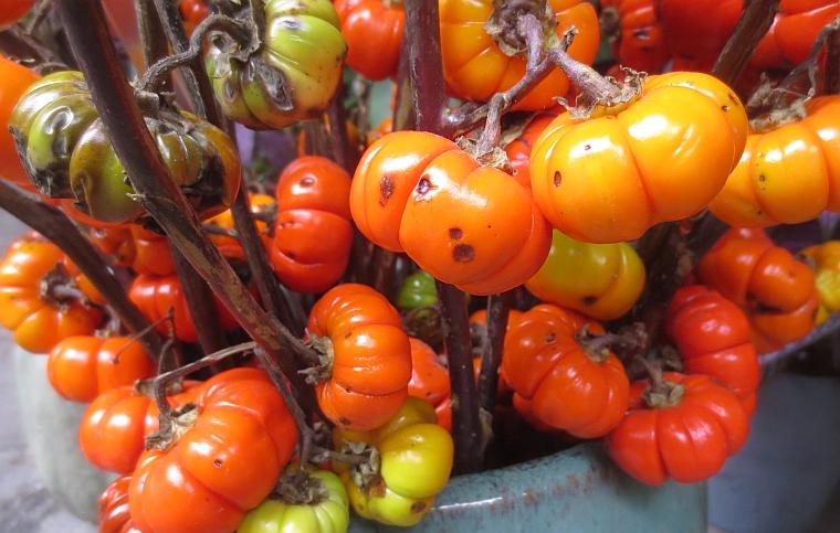 15 botanical gard 01