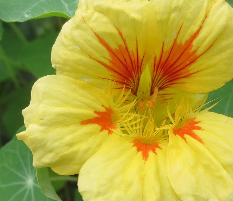 15sum flors001