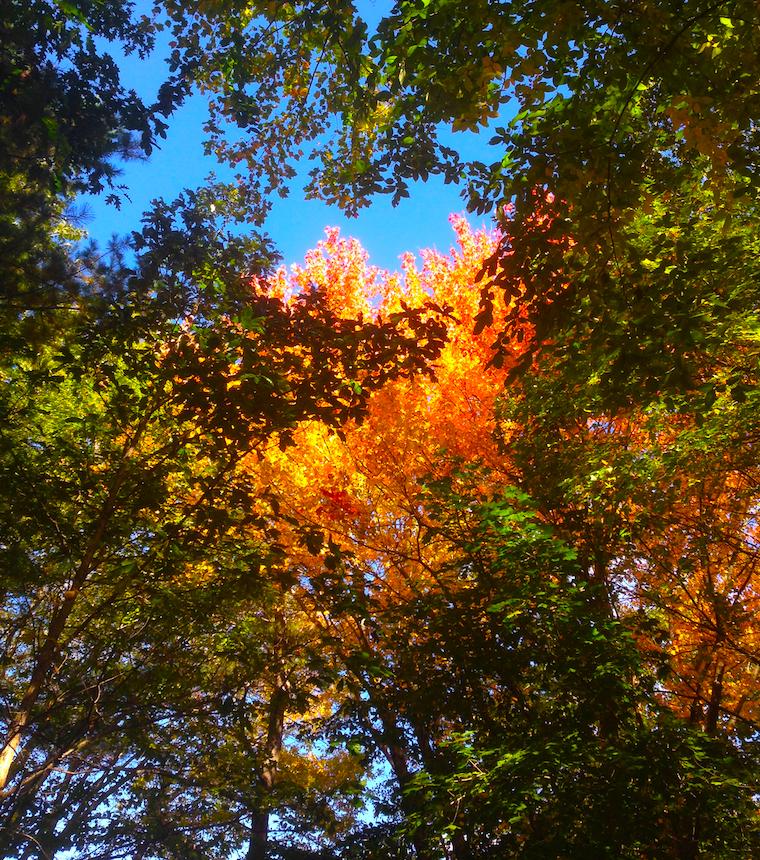 fall turn 1501