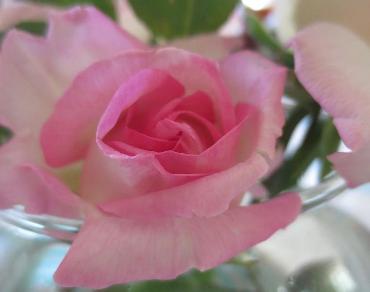 15-rose-puck-2
