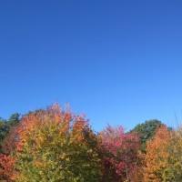 16 autumnjour01